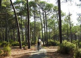 Piste cyclable Sud Gironde - Forêt des Landes de Gascogne