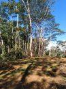 Terrain 0 m² Taiarapu-Est Plateau   pièces
