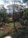 Terrain 0 m²  pièces Taiarapu-Est Plateau