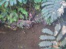 Terrain 0 m² Faaone   pièces