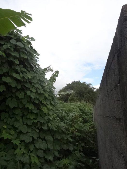 VenteTerrainBRAS-PANON97412La RéunionFRANCE