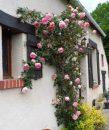 5 pièces 125 m² Maison  Nouzerolles Fresselines