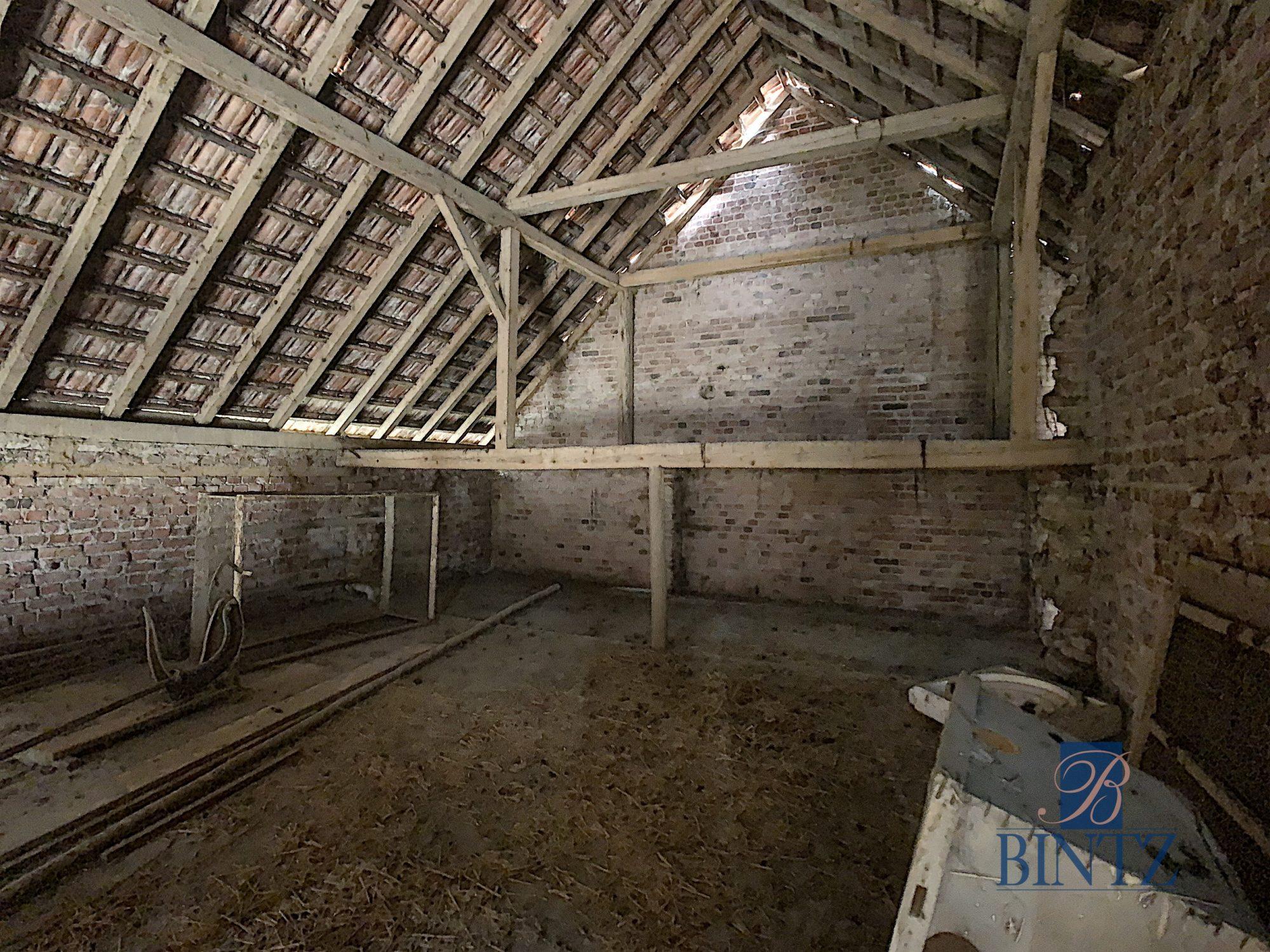 Corps de ferme à Gingsheim - Devenez propriétaire en toute confiance - Bintz Immobilier - 13
