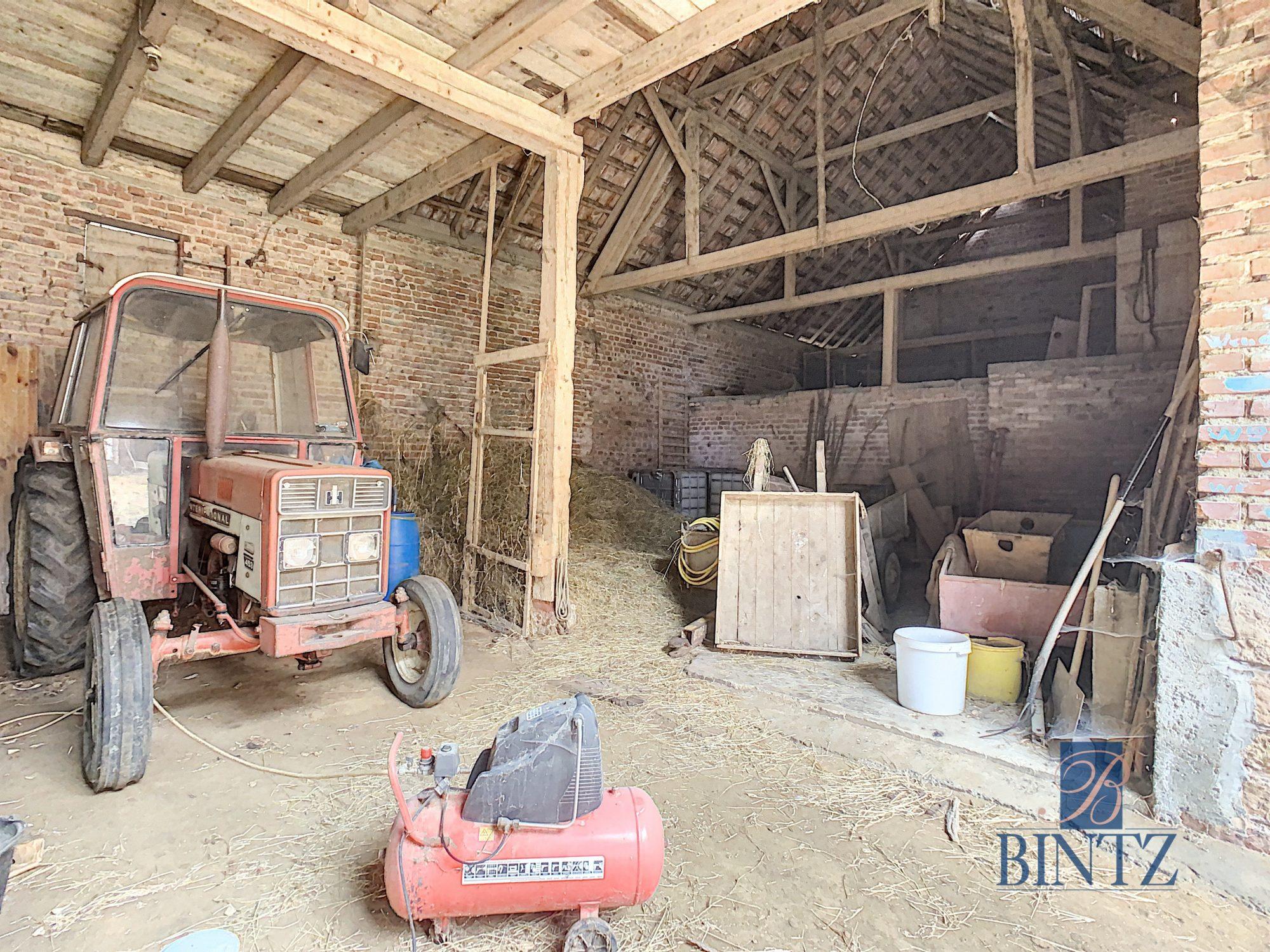 Corps de ferme à Gingsheim - Devenez propriétaire en toute confiance - Bintz Immobilier - 10