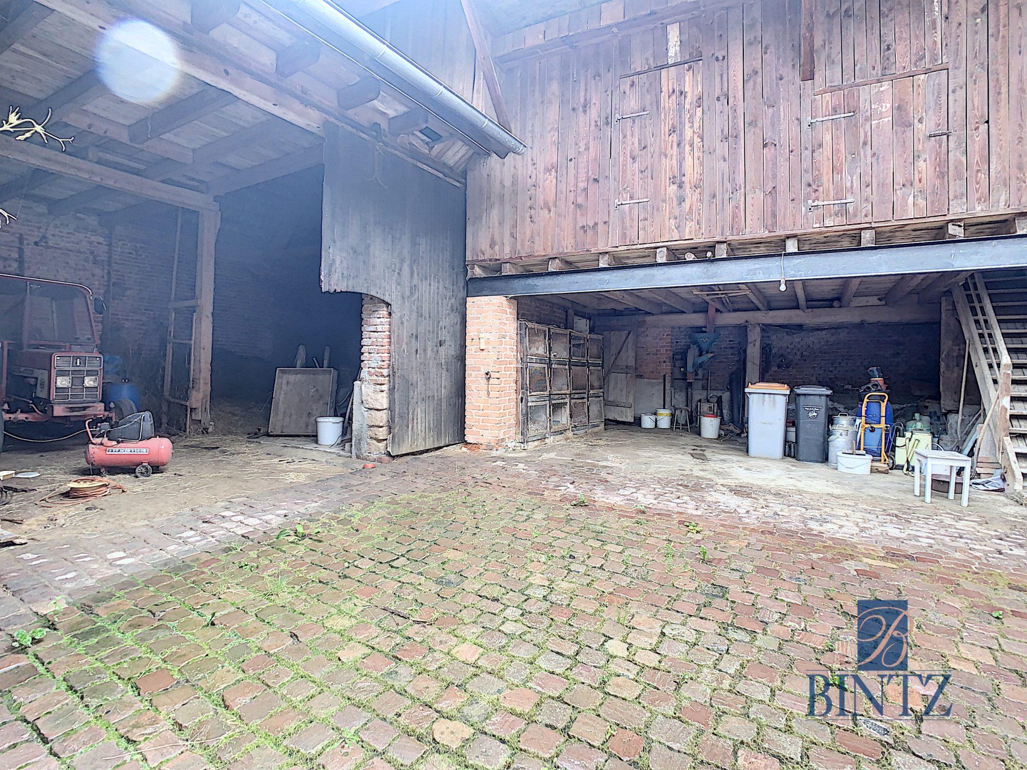 Corps de ferme à Gingsheim - Devenez propriétaire en toute confiance - Bintz Immobilier - 14