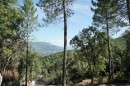 terrain sarrola carcopino  vente terrain ajaccio  terrain à vendre valle di mezzana