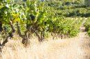 Property <b class='safer_land_value'>30 ha </b> Hérault