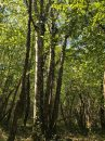 Property <b>275 ha </b> Yonne