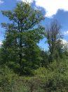 Property <b class='safer_land_value'>07 ha 20 a </b> Yonne