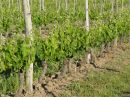 Property <b>26 ha 07 a </b> Dordogne