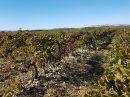 Property <b class='safer_land_value'>24 ha </b> Pyrénées-Orientales