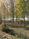 Property <b class='safer_land_value'>28 ha 19 a 72 ca</b> Jura