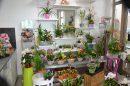 Immobilier Pro  Magny-les-Hameaux Yvelines 50 m² 0 pièces