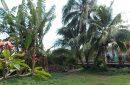 Moorea à Maharepa 2 maisons louées