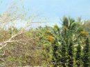 Terrain  TOAHOTU Presqu'île 0 m²  pièces
