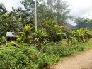 MOOREA... VEND: à PAOPAO, Terrain constructible de 1000 m² viabilisé et plat.