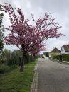 Maison 170 m² Bischheim  6 pièces