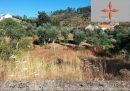 Terrain 740m2 avec des arbres fruitiers