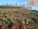 Terrain forestier de plus d'un hectare