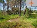 Castelo Branco    pièces 0 m² Terrain