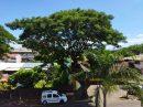 Appartement Papeete Papeete 50 m² 2 pièces