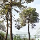 0 m² Bordeaux Bordeaux centre  pièces  Programme immobilier