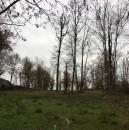 Terrain  Coussay-les-Bois  2808 m²  pièces