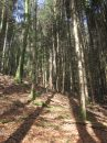 Propriété <b>03 ha 08 a </b> Vosges