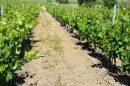 Propriété <b class='safer_land_value'>50 ha </b> Aude