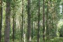 Propriété <b>54 ha 74 a </b> Haute-Garonne