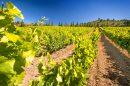 Propriété <b class='safer_land_value'>180 ha </b> Aude