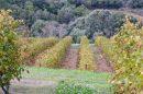 Propriété <b class='safer_land_value'>80 ha </b> Aude