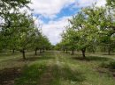 Propriété <b class='safer_land_value'>24 ha 58 a 86 ca</b> Lot-et-Garonne