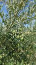 Propriété <b>04 ha 66 a </b> Alpes-de-Haute-Provence