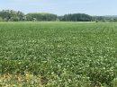 Propriété <b class='safer_land_value'>34 ha 66 a 75 ca</b> Lot-et-Garonne