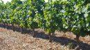 Propriété <b class='safer_land_value'>13 ha 50 a </b> Pyrénées-Orientales