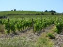 Propriété <b class='safer_land_value'>105 ha 60 a 24 ca</b> Aude