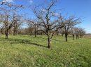 Propriété <b class='safer_land_value'>15 ha 21 a 03 ca</b> Lot-et-Garonne