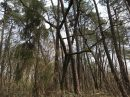 Propriété <b class='safer_land_value'>30 ha 63 a 36 ca</b> Dordogne