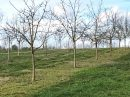 Propriété <b class='safer_land_value'>32 ha 38 a 04 ca</b> Dordogne