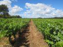 Propriété <b class='safer_land_value'>29 ha </b> Gard