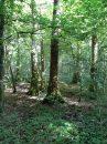 Propriété <b class='safer_land_value'>02 ha 93 a 30 ca</b> Meurthe-et-Moselle