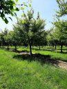 Propriété <b class='safer_land_value'>30 ha 79 a 97 ca</b> Lot-et-Garonne