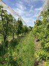 Propriété <b class='safer_land_value'>26 ha 40 a 70 ca</b> Lot-et-Garonne