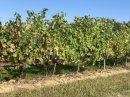 Propriété <b class='safer_land_value'>23 ha 35 a </b> Lot-et-Garonne