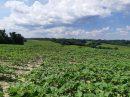Propriété <b class='safer_land_value'>190 ha </b> Landes