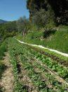 Propriété <b>06 ha 50 a </b> Alpes-Maritimes