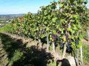 Propriété <b>35 ha 85 a </b> Gironde