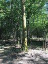 Propriété <b class='safer_land_value'>14 ha 94 a 70 ca</b> Saône-et-Loire