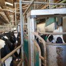 Dairy farm 1.3M l sector West Pontivy on 120ha